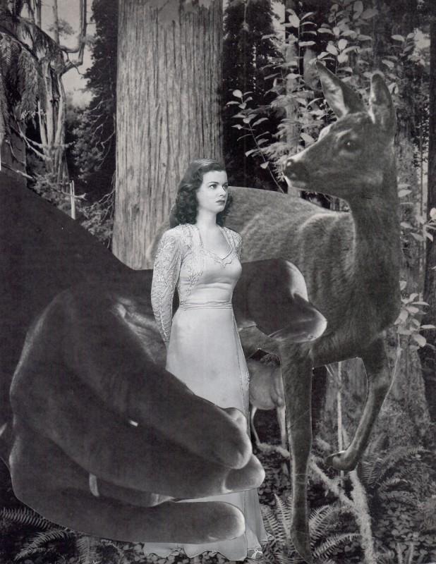 Deers - Rehe