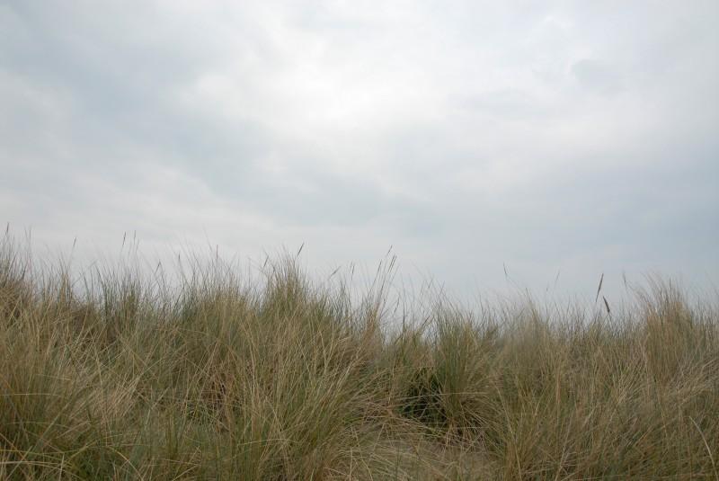 Dünen / Dunes