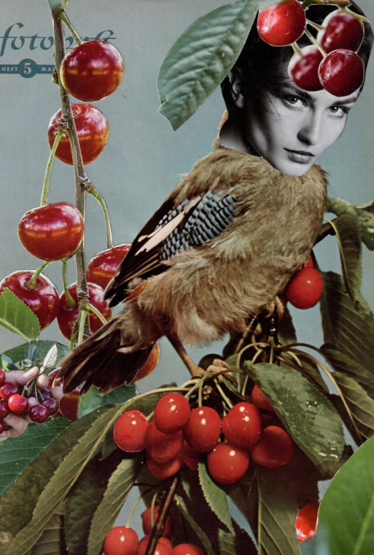 Cherry Bird / Kirschvogel - FP 5