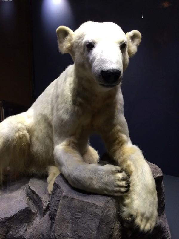 Naturkundemuseum Berlin - Zoologie