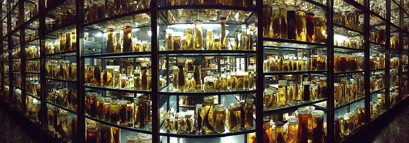 Naturkundemuseum Berlin - Zoologie - Formaldehydkammer