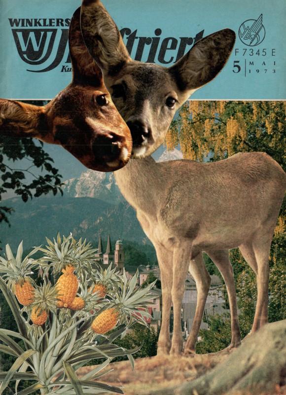 WI 5 Rehe in  Berchtesgaden - Deer in Berchtesgaden