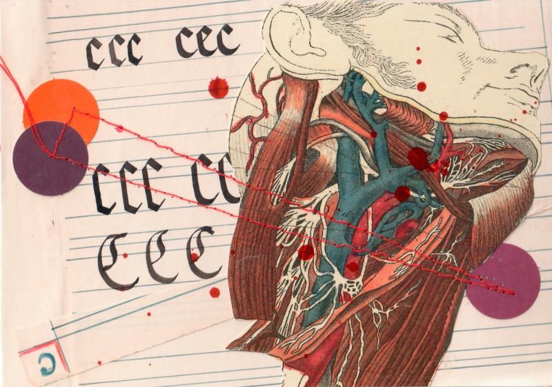 Anatomisches Alphabet C