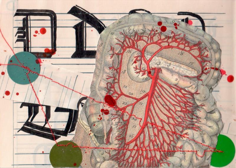 Anatomisches Alphabet D