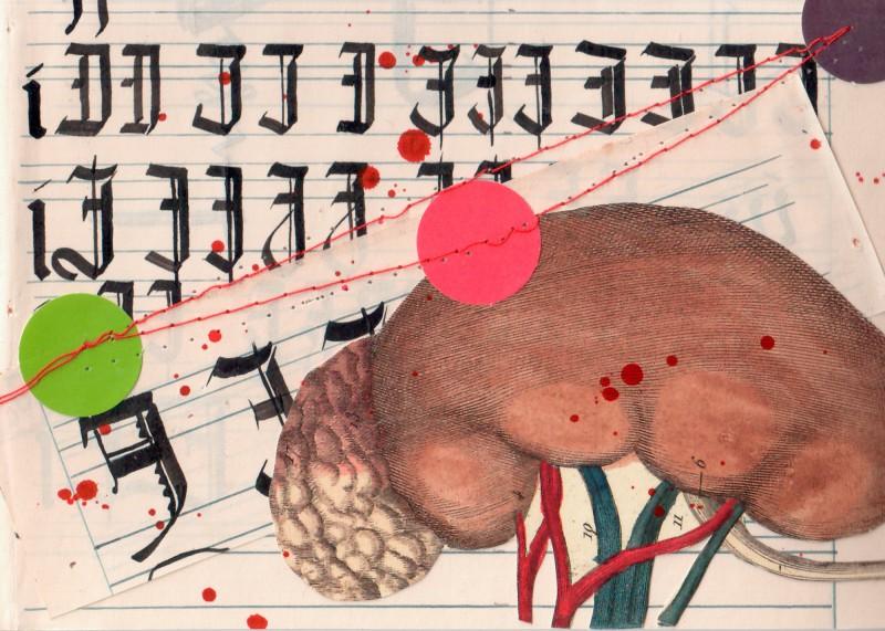 Anatomisches Alphabet IJ