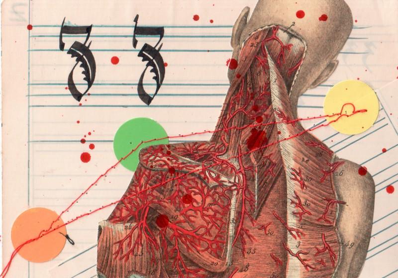 Anatomisches Alphabet Z