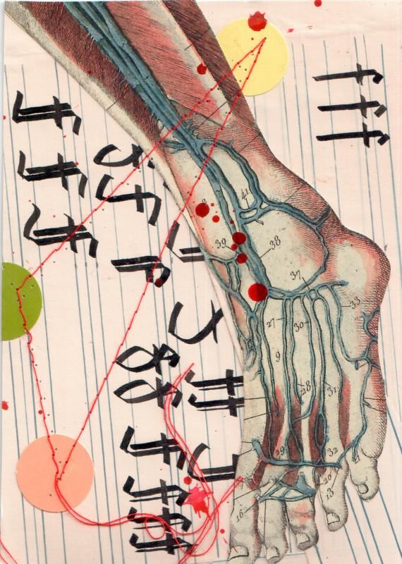 Anatomisches Alphabet F