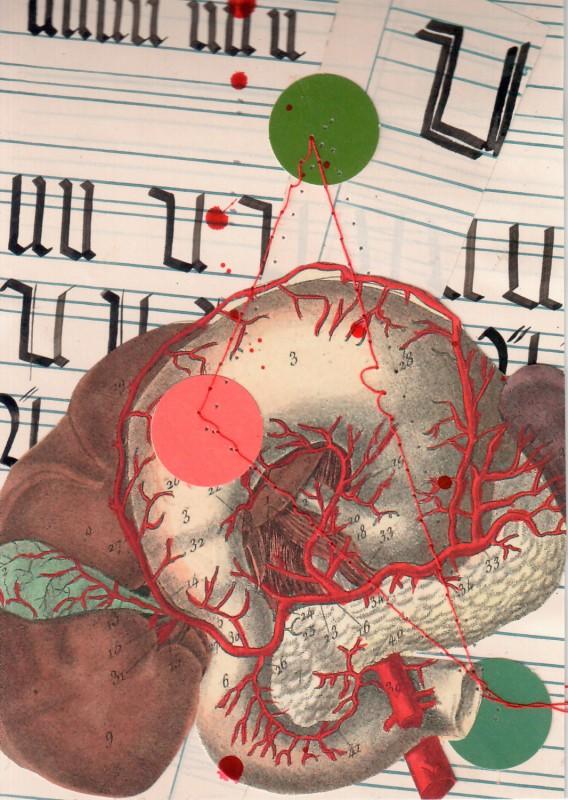 Anatomisches Alphabet U