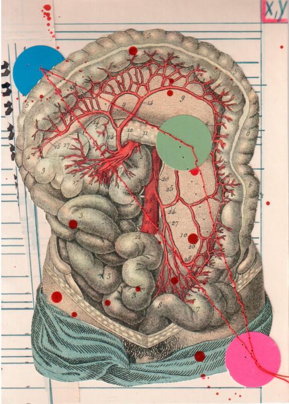 Anatomisches Alphabet XY