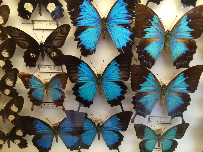 Naturkundemuseum - Museo di Storia Naturale Venedig
