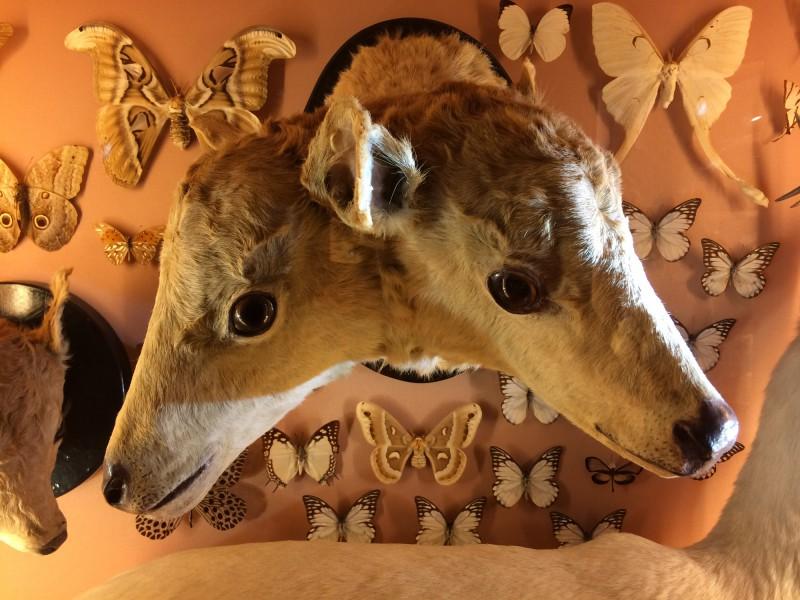 Wunderkammer im Naturkundemuseum - Museo di Storia Naturale Venedig