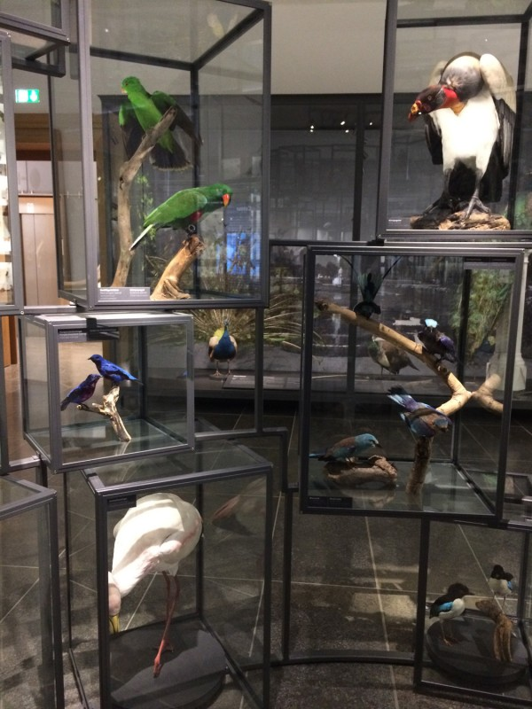 Museum Wiesbaden Dauerausstellung Natur