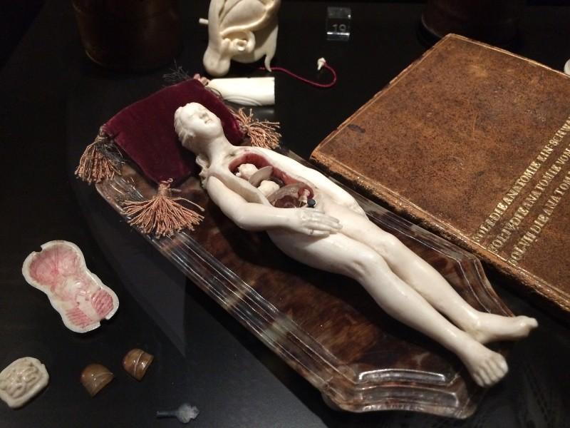 Anatomisches Lehrmodell einer Schwangeren - mit Begleitbuch - um 1680 - Wunderkammer Olbricht<br>Anatomical teaching models of a prignant woman - around 1680 - with accompanying book - Wunderkammer Olbricht
