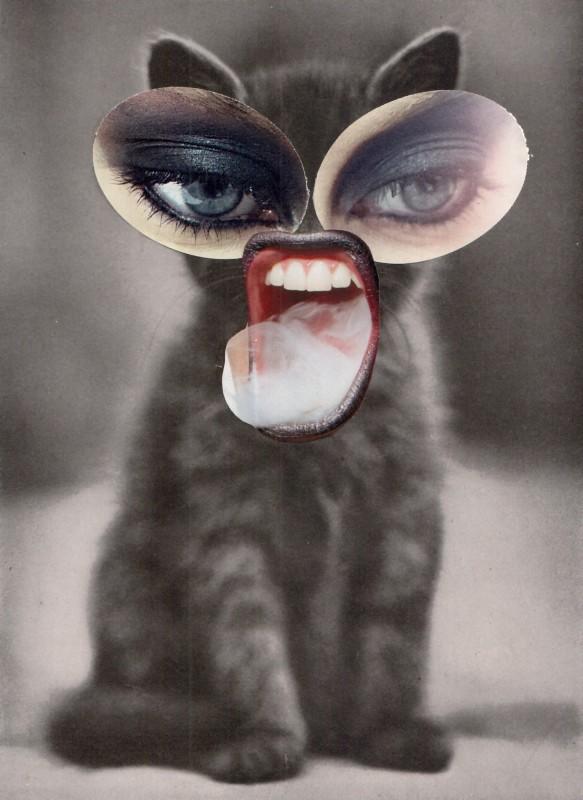 Nur eine kleine Katze / Just a little cat