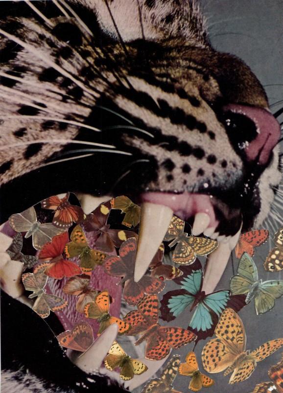 Schmetterlingsgebrüll / Butterfly Roaring