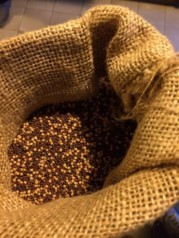 Senfsaat<br>Mustard seed