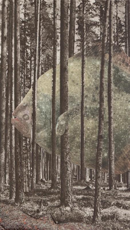 Der Butt / The Flounder
