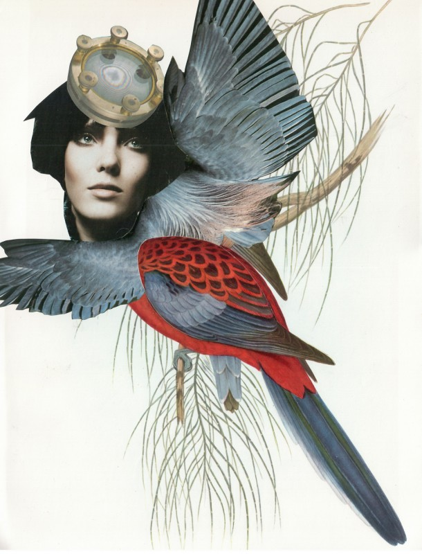 Exotischer Vogel / Exotic Bird 3