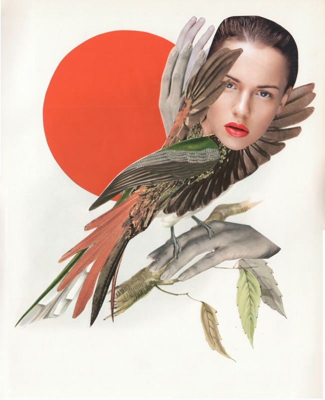 Exotischer Vogel / Exotic Bird  1