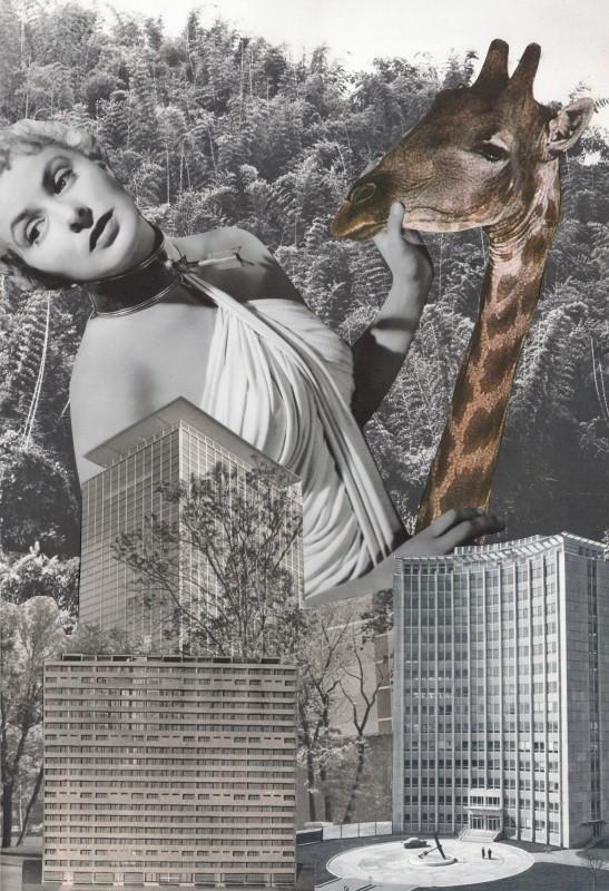 Giraffen Traum / Giraffe Dream