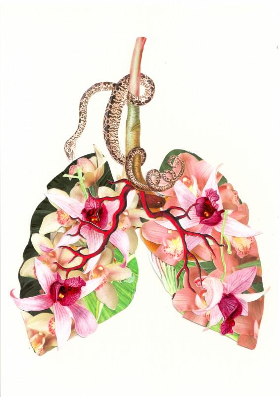 Lungen / Lungs
