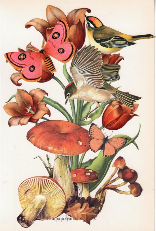 Wonder of Tulips - Tulpen Wunder 12