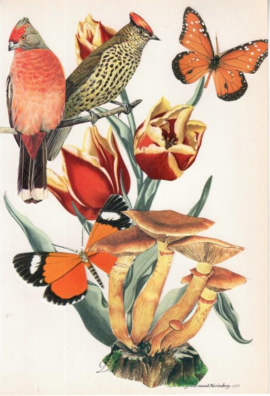 Wonder of Tulips - Tulpen Wunder 14