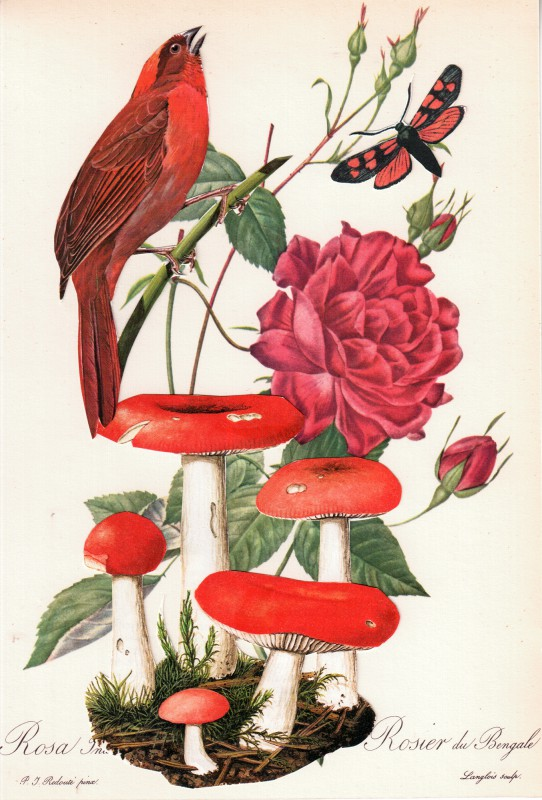 Wonder of Tulips - Tulpen Wunder 4