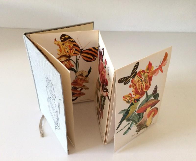 Wonder of Tulips - Tulpen Wunder Buch