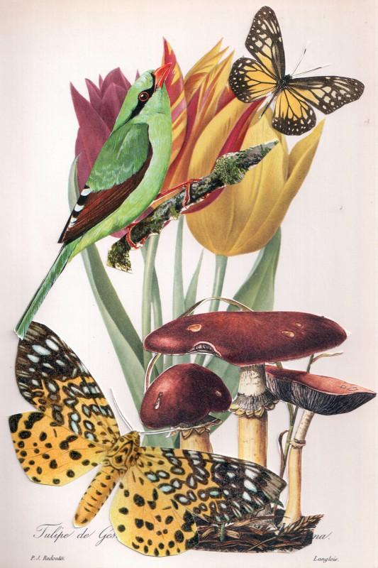 Wonder of Tulips - Tulpen Wunder 10