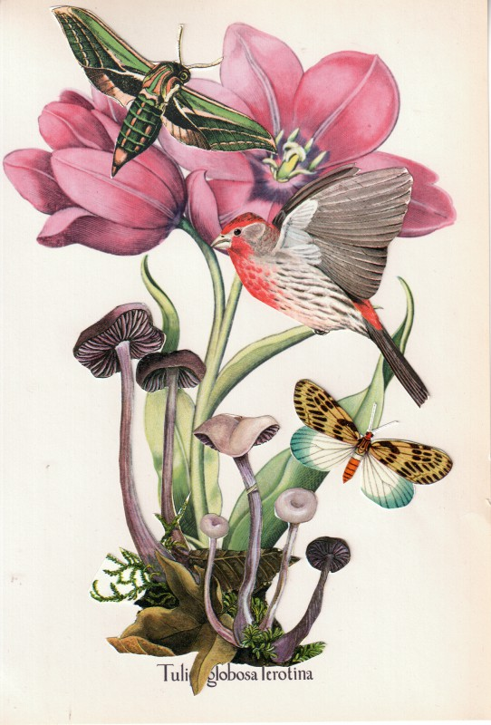 Wonder of Tulips - Tulpen Wunder 5