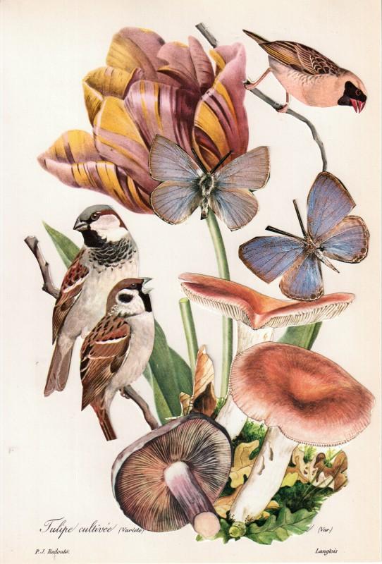Wonder of Tulips - Tulpen Wunder 9