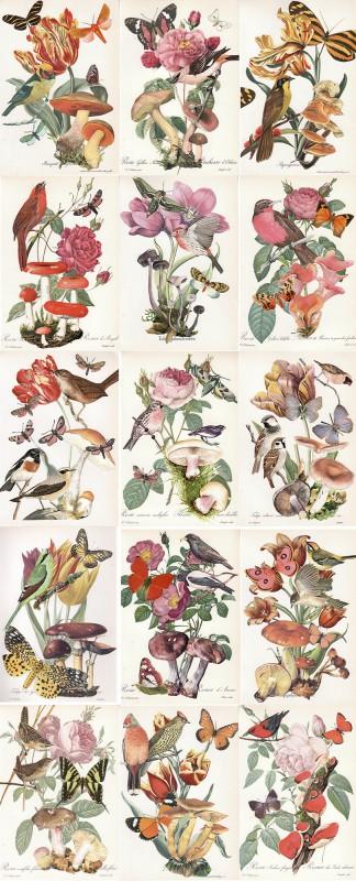 Wonder of Tulips - Tulpen Wunder  All together