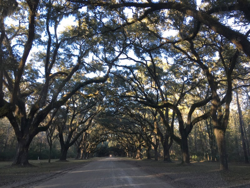 Ausflug nach / Trip to Wormsloe State Historic Site