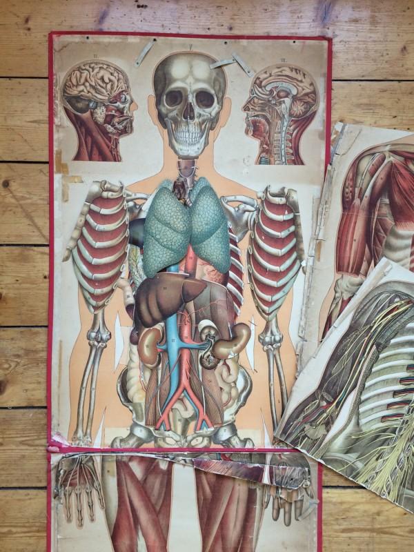 Anatomische Tafel