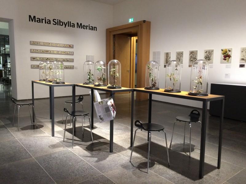 Maria Sibylla Merian Museum Wiesbaden