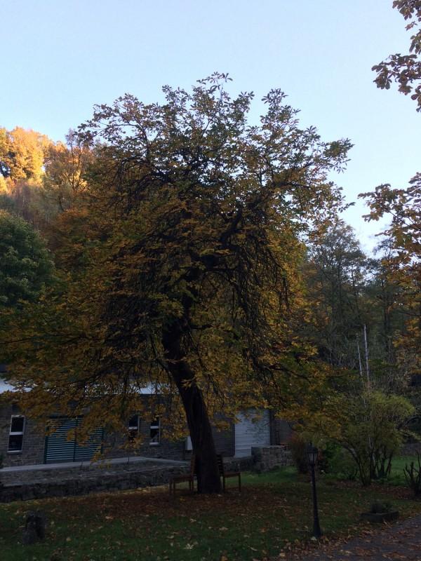 Auf dem Gelände der Historischen Senfmühle Breuer - Monschau<br>On the compound of the Historical Mustard Mill Breuer - Monschau