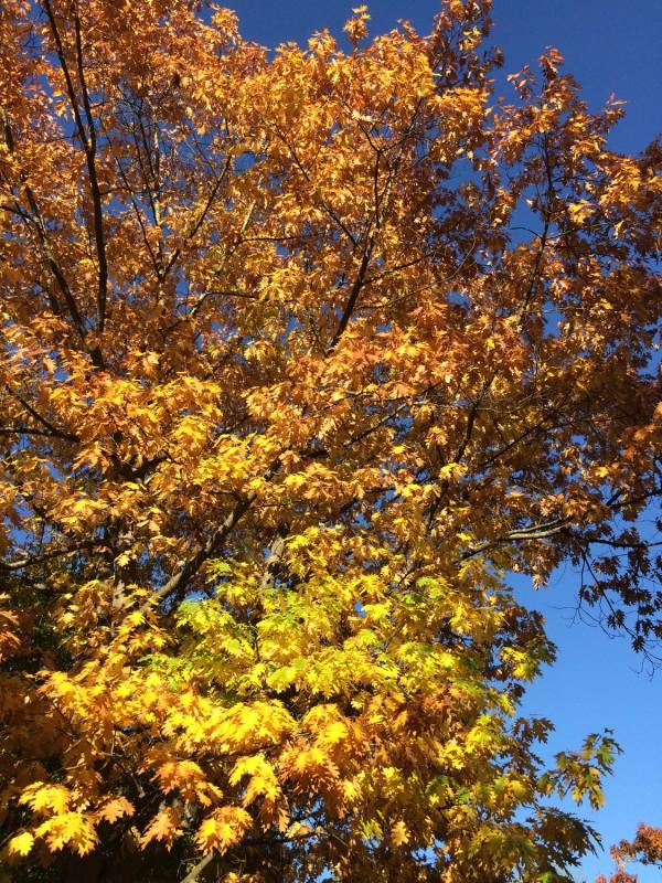 Ein wunderschöner Herbsttag in der Eifel<br>A wonderful autumn day in the Eifel