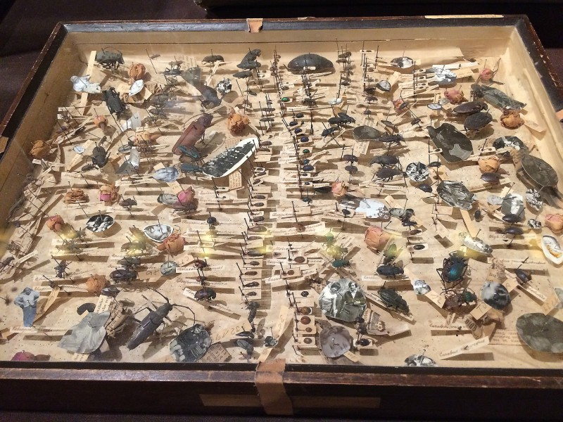 Sigrid Sigurdsson - Die Architektur der Erinnerung, 1988 - 2009 -  Das Museum im Museum - Schaukasten Sigrid Sigurdsson