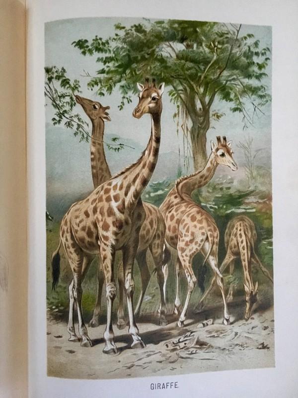 Brehms Tierleben 1902