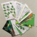 Attic Zine No 9 - Green 2 - all together thumbnail